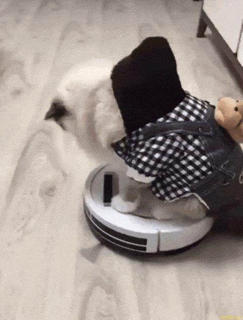 Katzen Roboter Spielzeug
