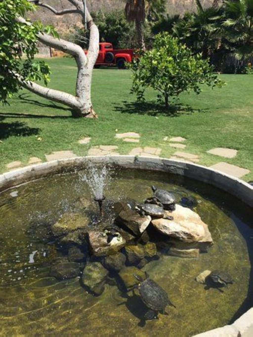 best diy pond project for your own home diy pond