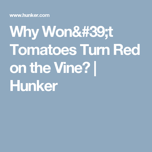 Why Won't Tomatoes Turn Red On The Vine?