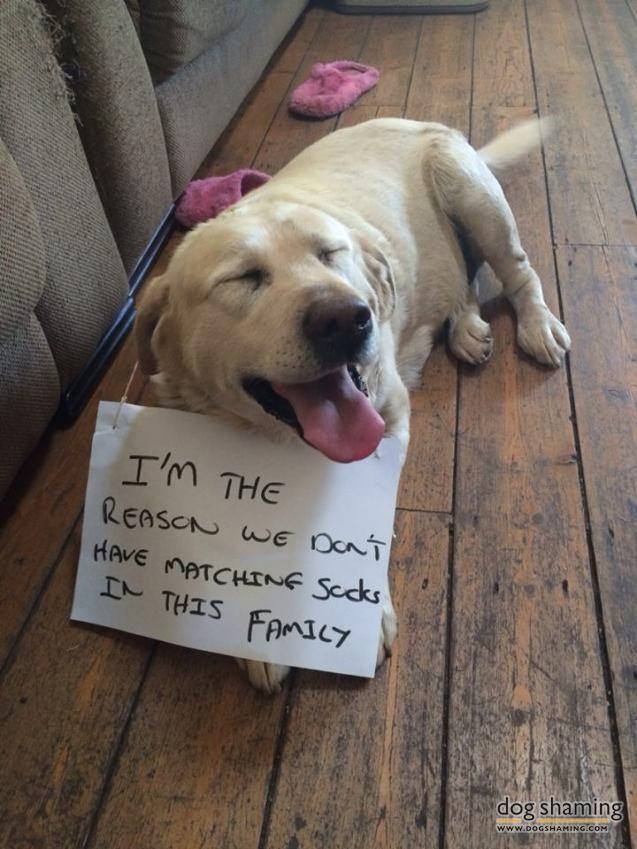 truth. dogs. retriever. mismatching socks. :)