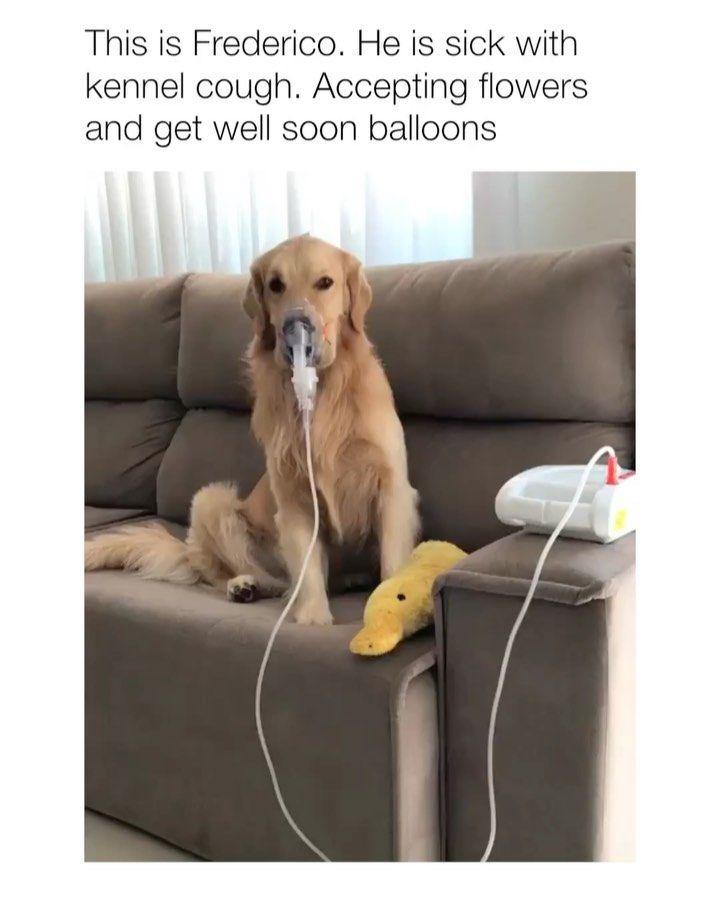 Dog on instagram get well soon buddy via golden