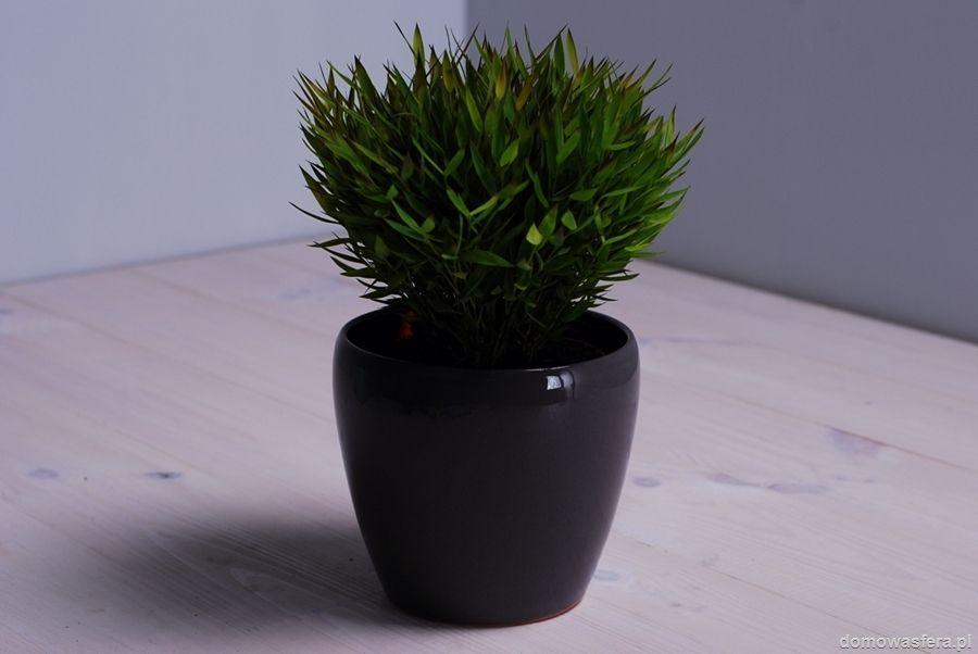 Ceramiczna doniczka, wykończona gładkim i wypolerowanym szkliwem koloru szarego. Ozdobi każdy parapet, taras czy ogród. Piękno tkwi w prostocie.