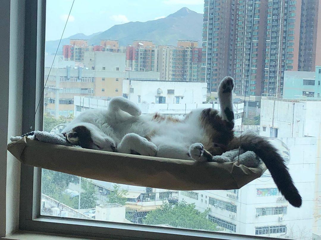 再黎 #喵 #貓 #neko #猫 #猫好きさんと繋がりたい #cat #catstagram #catsoftheday #catlife #catsofinstagram #catsdaily #cats_of_instagram #instacat #livewithcat #貓奴 #港短 #港貓 #hkcatstagram #meow #pet #petsofinstagram #肥牛 #牛牛 #寶貝 #領養代替購買 #毛孩