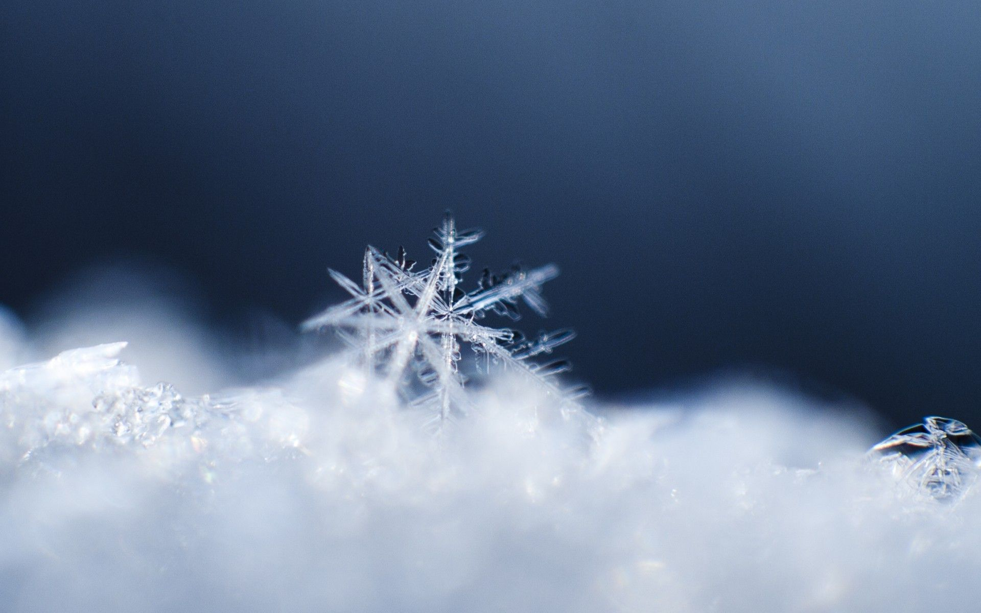 Winter Snow Snowflakes Macro 1920x1200 Wallpaper Snowflakes