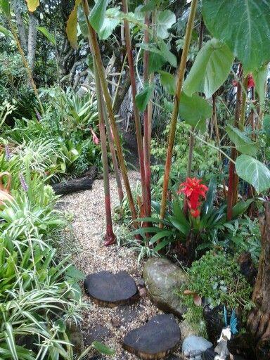 Mis jardines