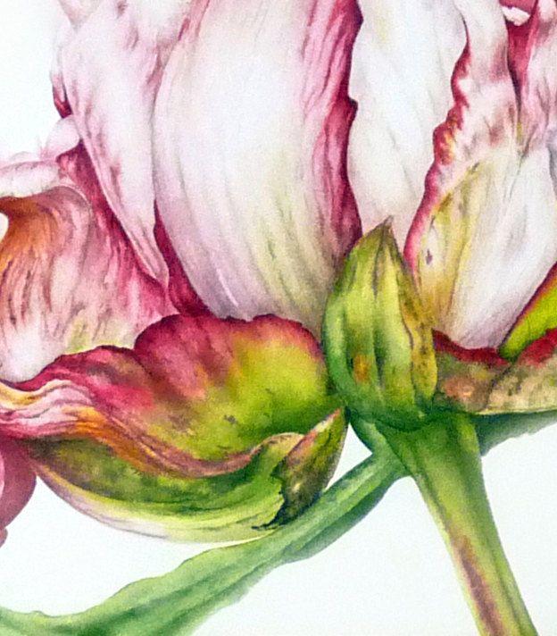 Botanical Print Illustration Botanical Flowers Leaves Botanic