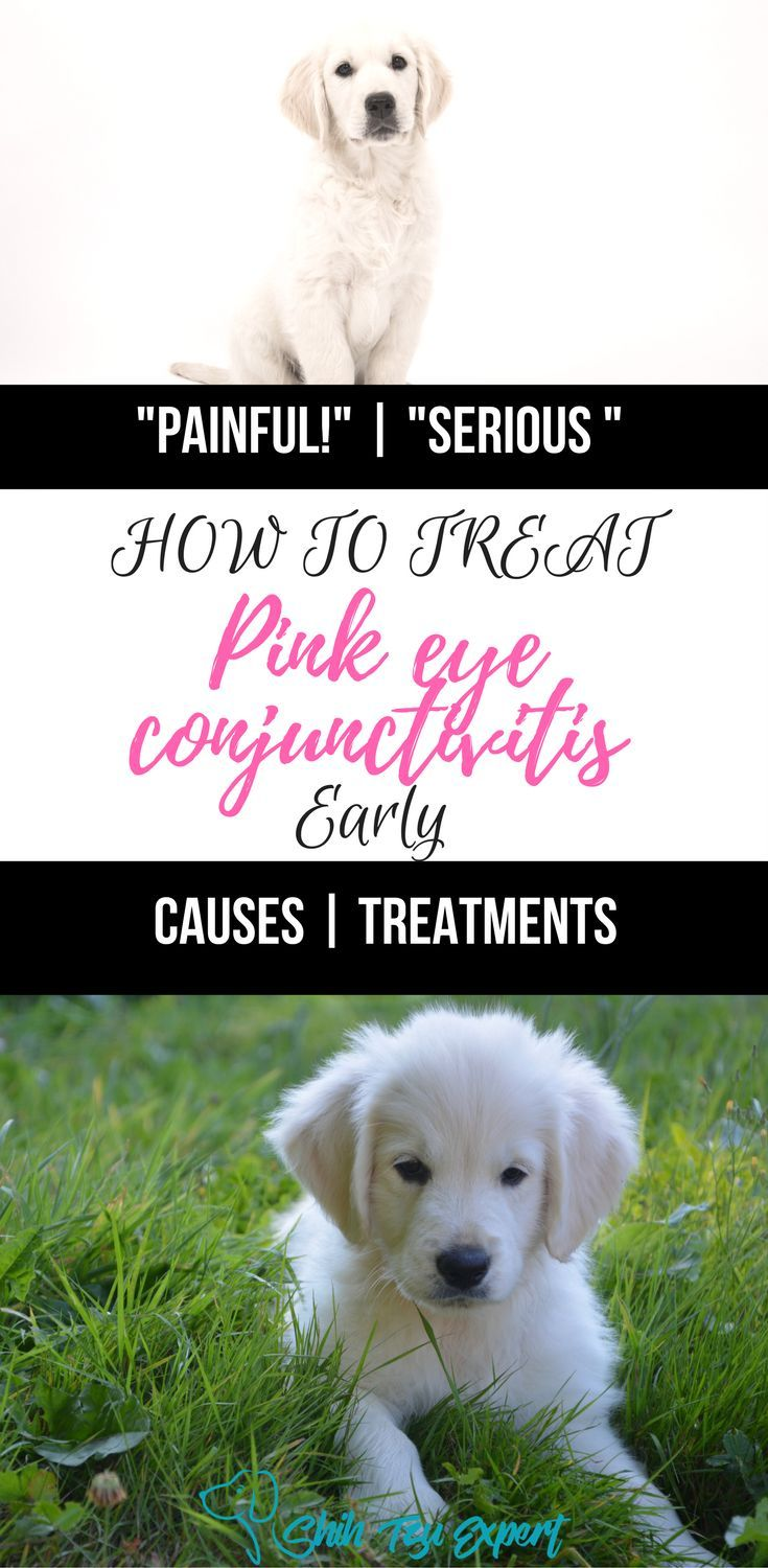 Medium Of Dog Pink Eye