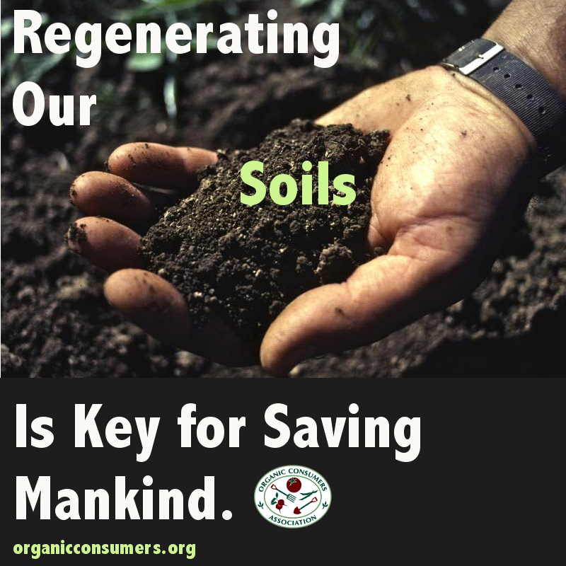 Regenerating Our Soils Is Key for Saving Mankind (With