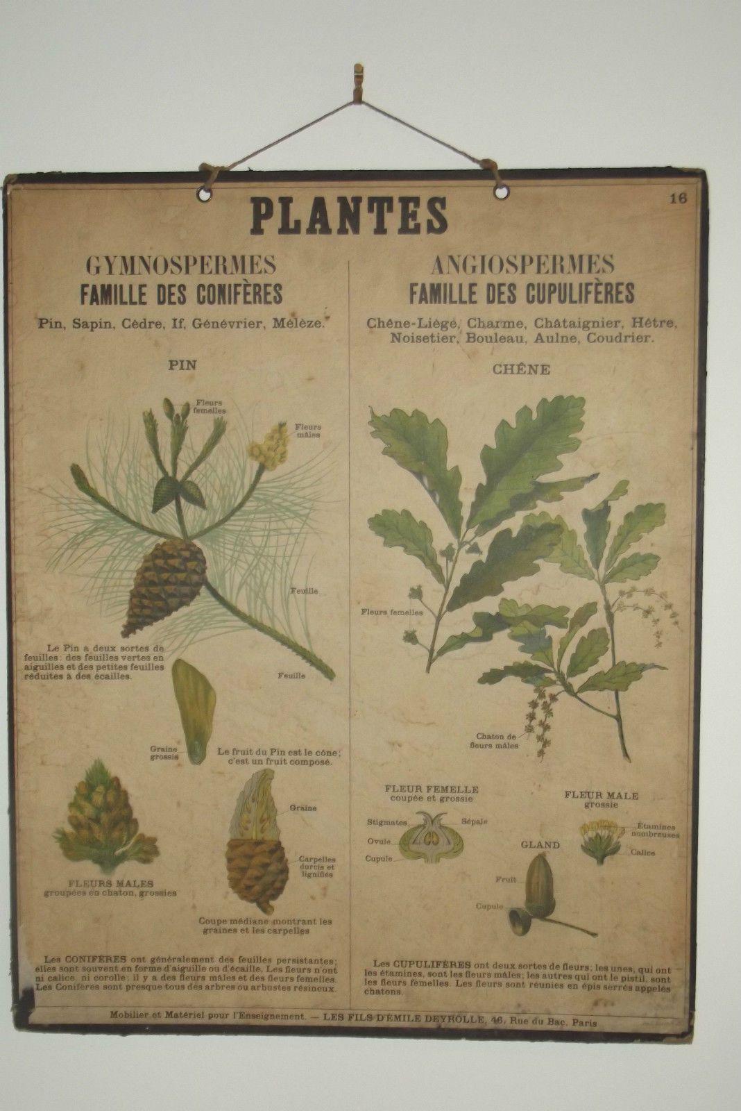 ancienne affiche scolaire deyrolle planche ecole n 16 sciences naturelles affiche pinterest. Black Bedroom Furniture Sets. Home Design Ideas