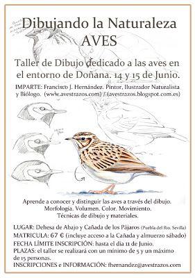 Drawing birds workshop