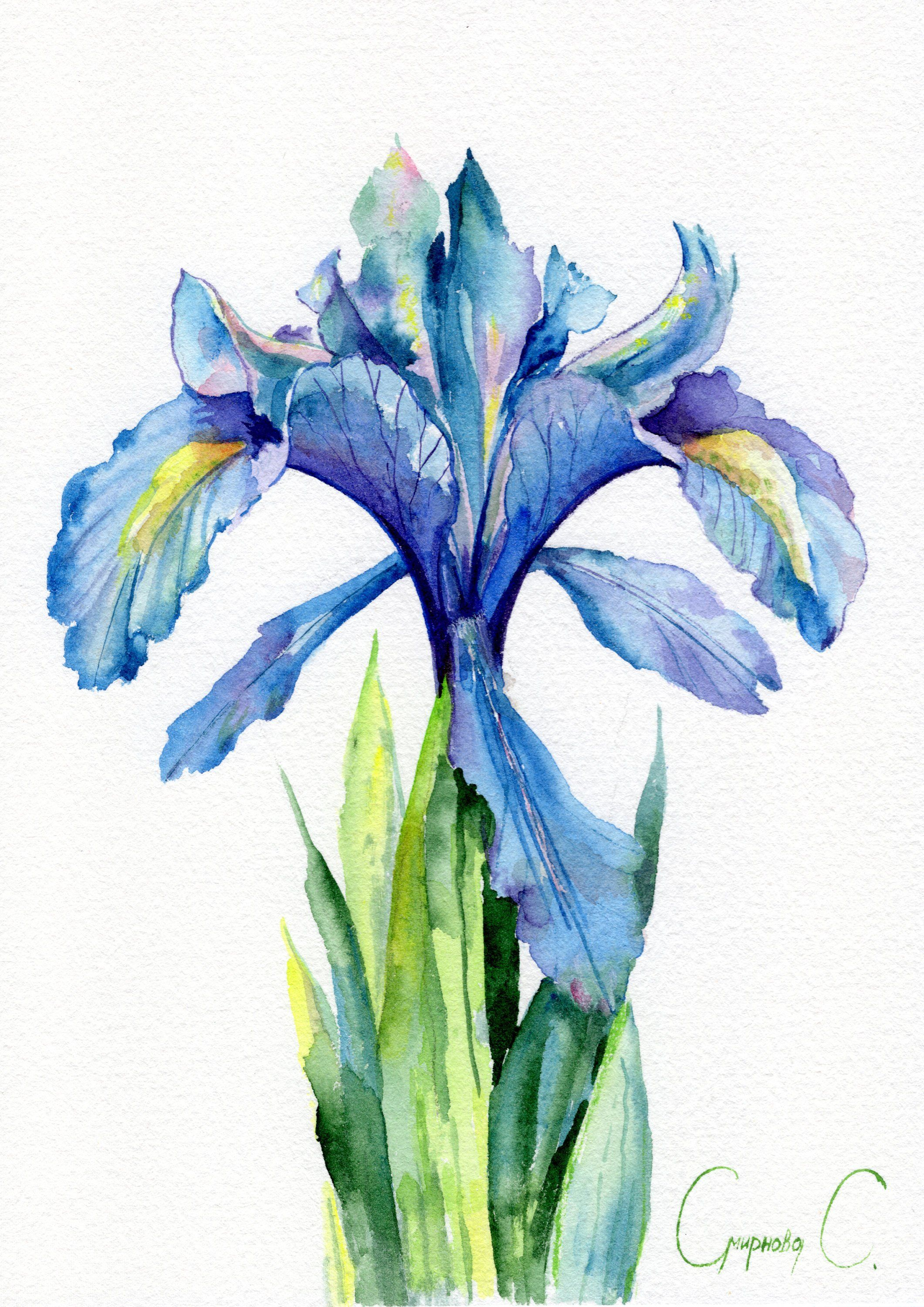 Iris Print Flower Herbs Plants Blue Green Print Of Original