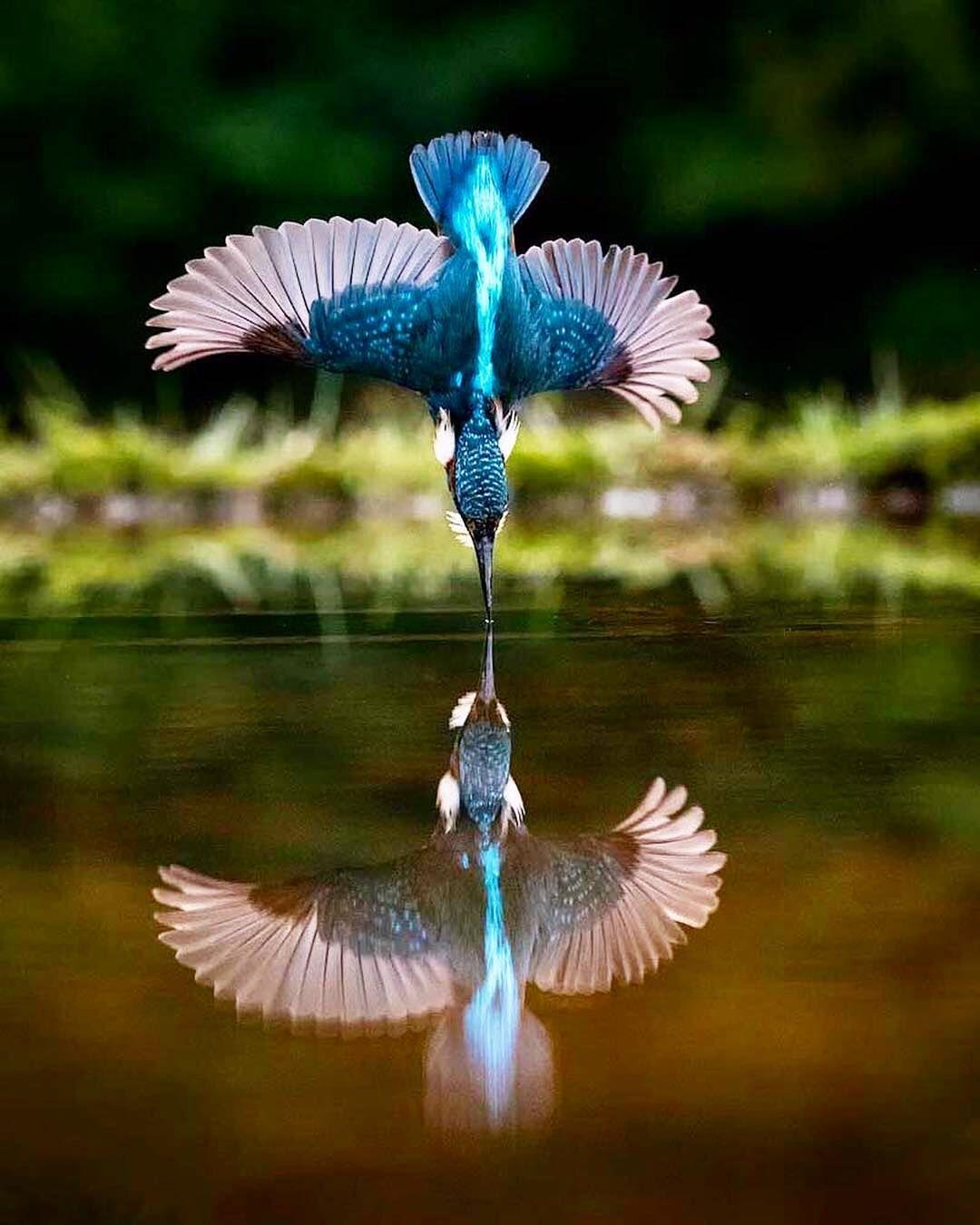 Nature In 2020 Wildlife Photography Beautiful Birds Birds