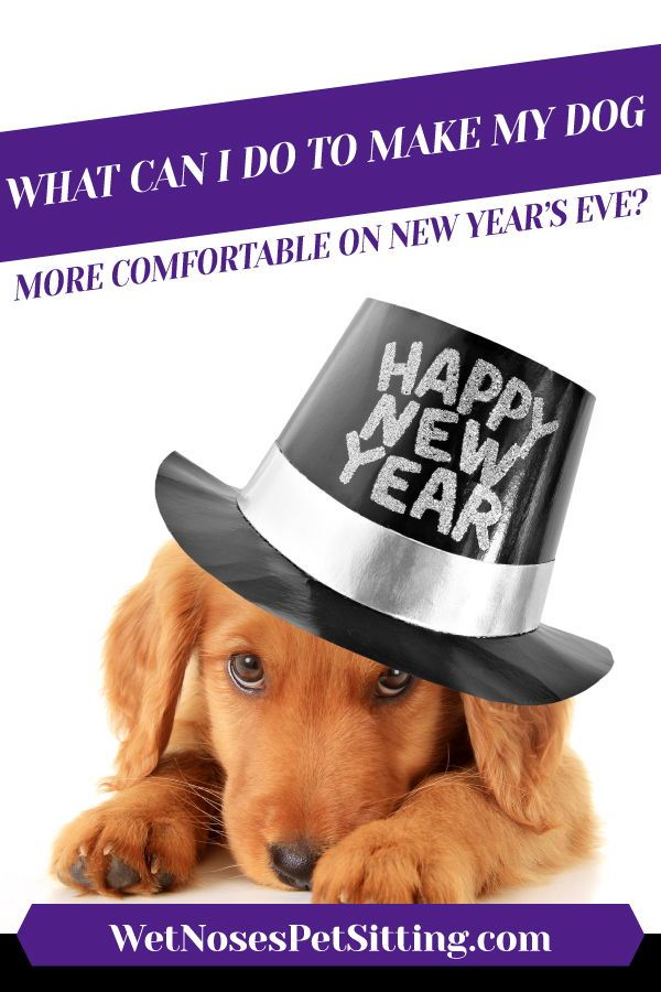 What Can I Do to Make My Dog More Comfortable on New Year