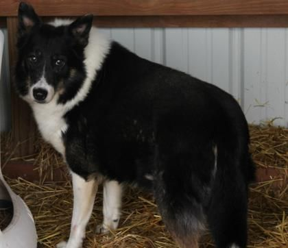 Adopt Gabe, a lovely 7 years Dog available for adoption at