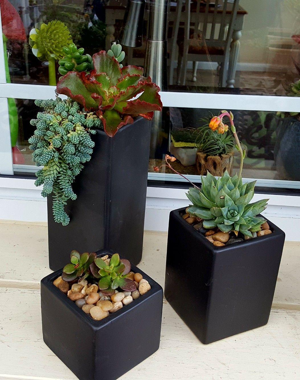 Pin by mini jardines info on paisajes y jardines pinterest cacti