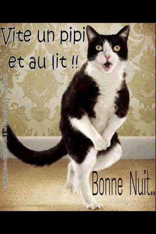 199 A Presse Image Bonne Nuit Bonne Nuit Et Bonne Nuit Dr 244 Le