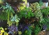vertical gardening - Yahoo Image Search Results