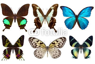 Stampa su tela Butterflies. #stampa su #tela