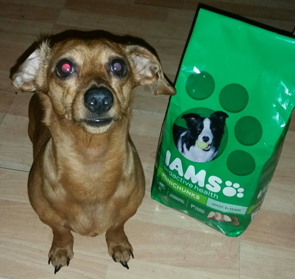 #AD #Smiley360 #IamsDogFood Experience #GotItFree See The Difference,SCOBBY LOVES IT!!
