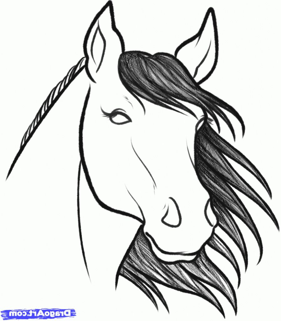 Easy To Draw Horse Head How To Draw A Horse Head Stepstep Farm
