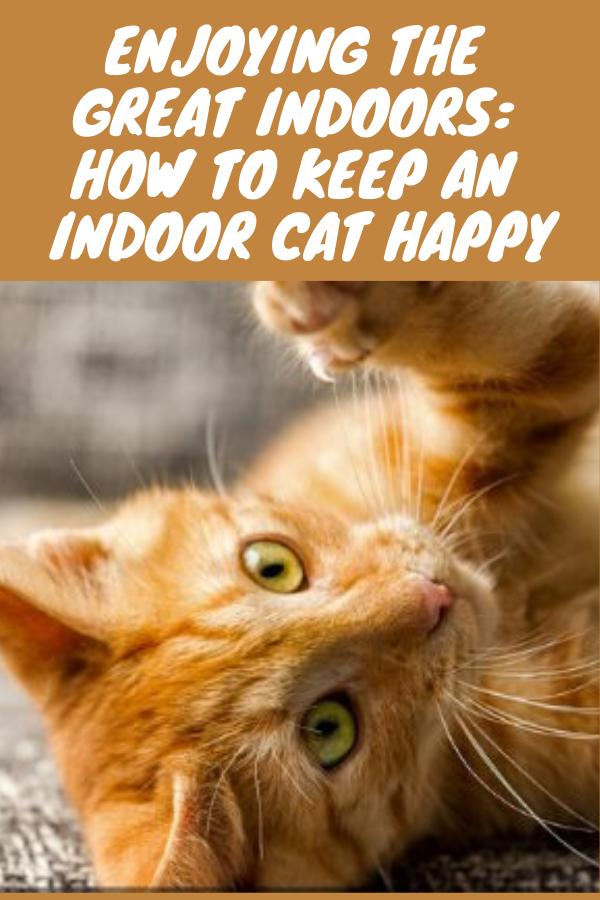 Enjoying The Great Indoors How To Keep An Indoor Cat Happy In 2021 Indoor Cat Cats Cat Love Quotes