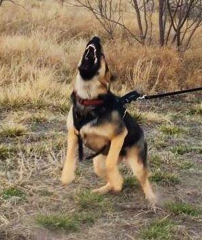Ni-Abi training in personal protection in Abilene, TX.