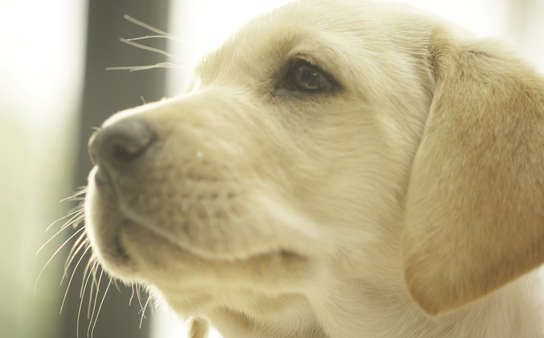 Die Geheime Welt Unserer Hunde