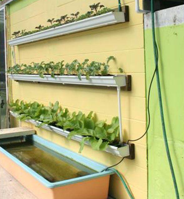 Do It Yourself Home Design: DIY Rain Gutter Aquaponic System