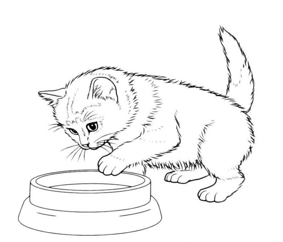 Картинки печать кошки