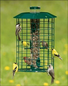 Cage Bird Feeder Squirrel Proof Bird Feeders | Be A Better Host To Your Beautiful Visitors