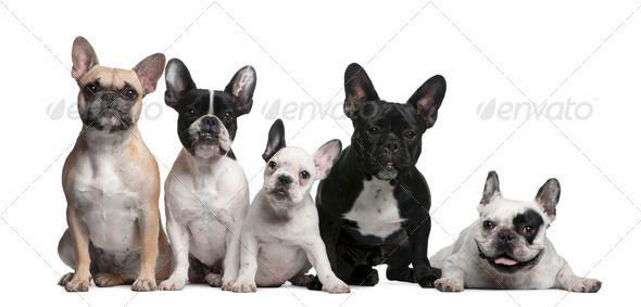 Gonna Miss This Group Www Poeticfrenchbulldogs Com