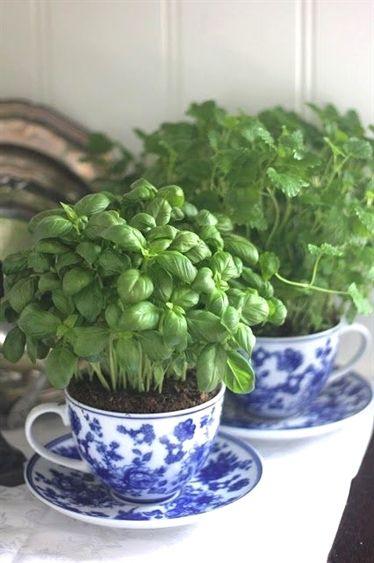 نبات بحرف ض مجموعة متنوعة ما بين النباتات العطرية والصحراوية بالصور إيمدج عرب Window Herb Garden Diy Herb Garden Herbs Indoors