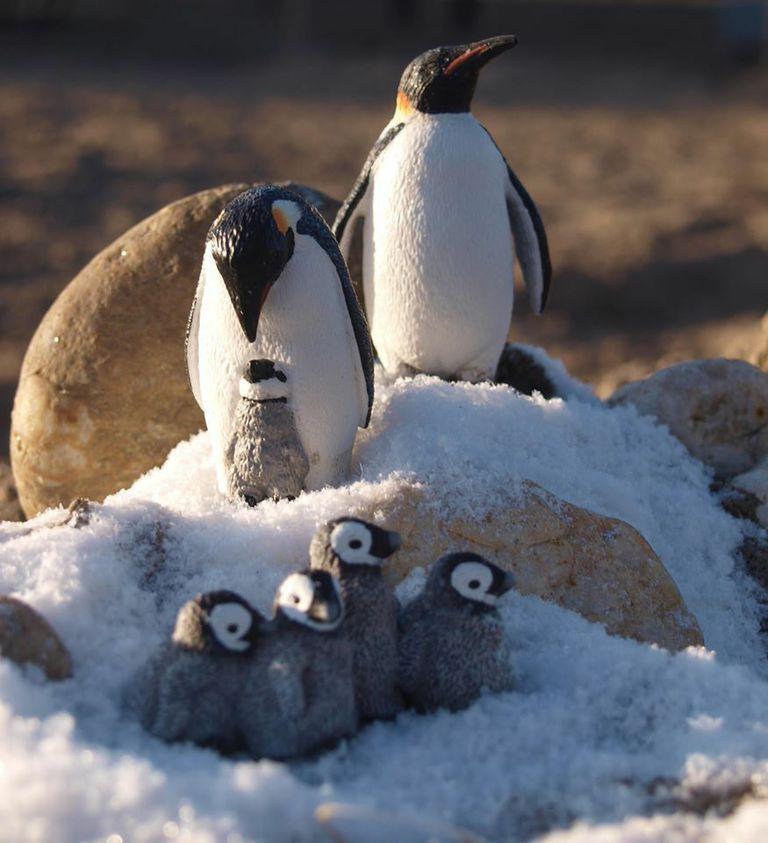 Для открытки, картинка с пингвинами 94