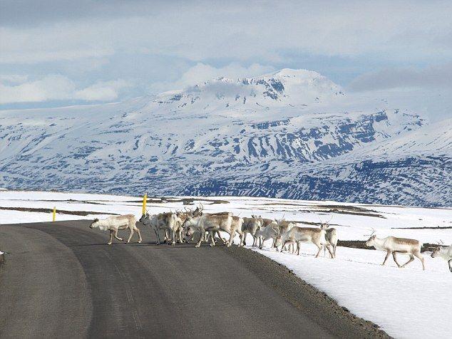 A Islândia é uma paisagem de conto de fadas onde a cascata de renas de penhascos, rios cre...
