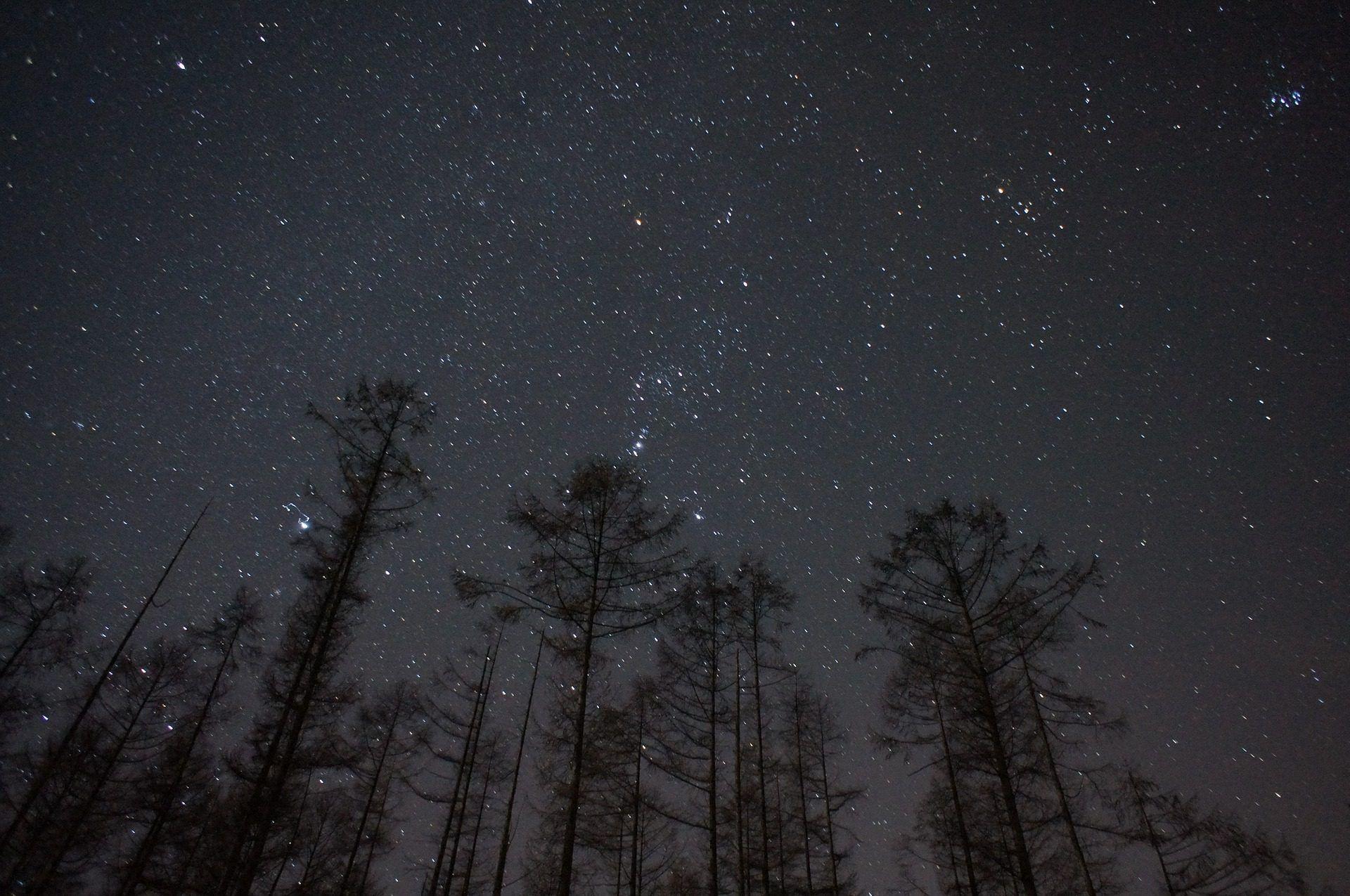 árboles, Cielo, Noche, Estrellas, Universo, 1710160854