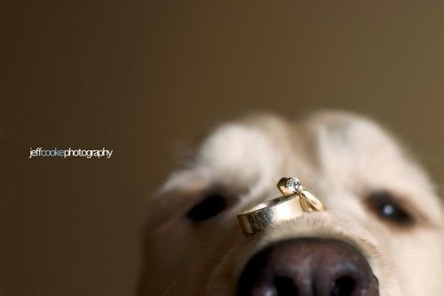 Cute ring picture for those including their pets in the wedding