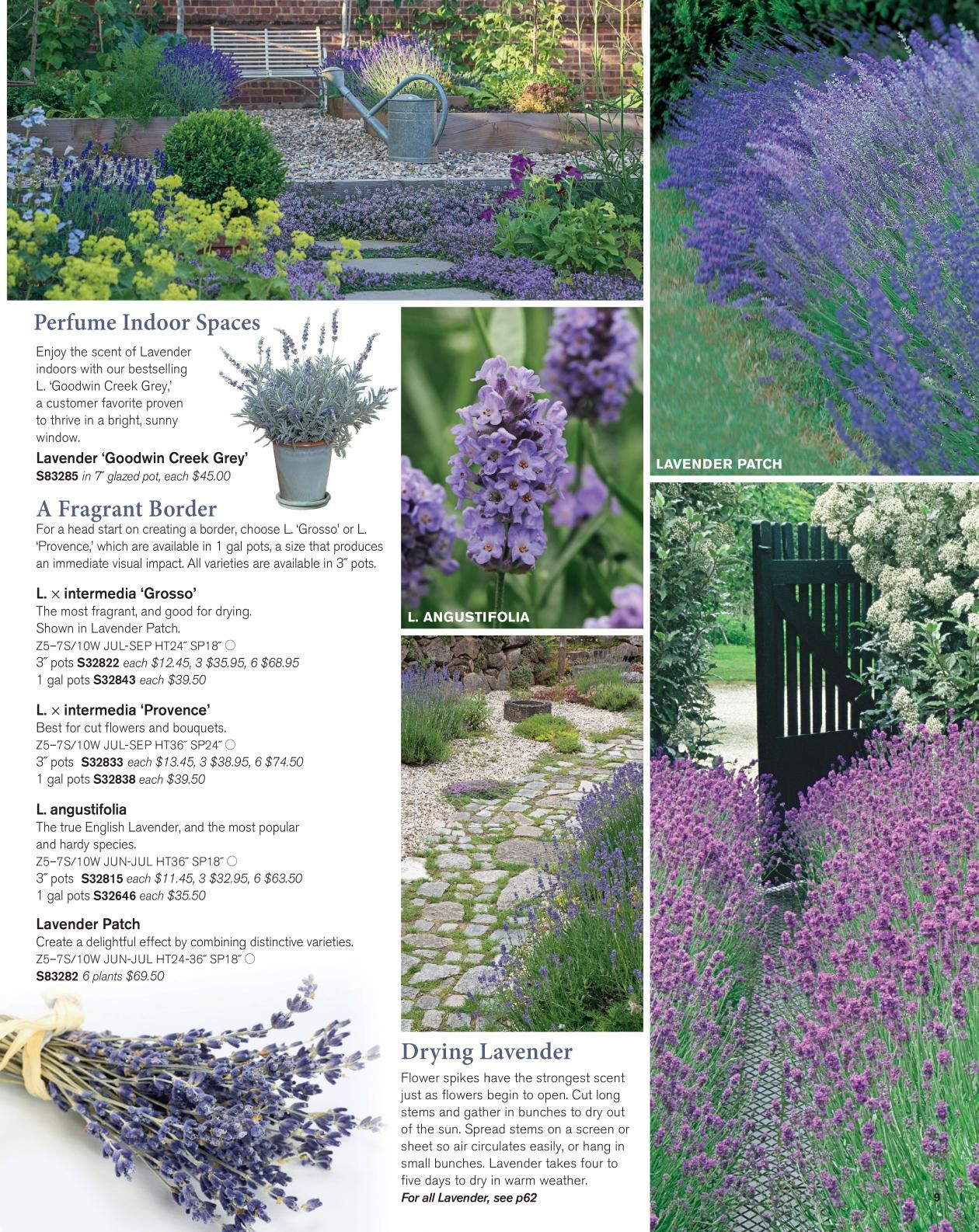 White Flower Farm Catalogs Lavender I Luv Pinterest White