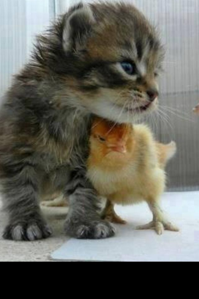 Cute photo. Young ones seem to get along so much better