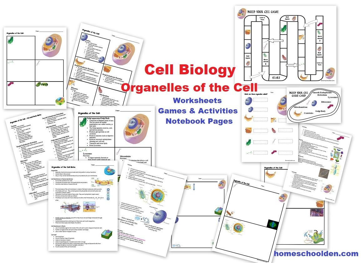 Cell Unit Cell Organelles And Their Function Animal Vs