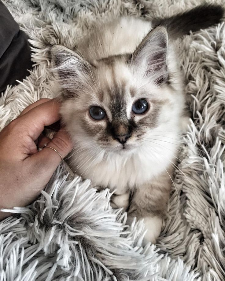 Marion Turcotti Cute Creatures Kitten Adoption Cute Cats