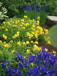 Happy Returns Daylily And Irises Garden Yard Ideas Day Lilies Japanese Garden Zen