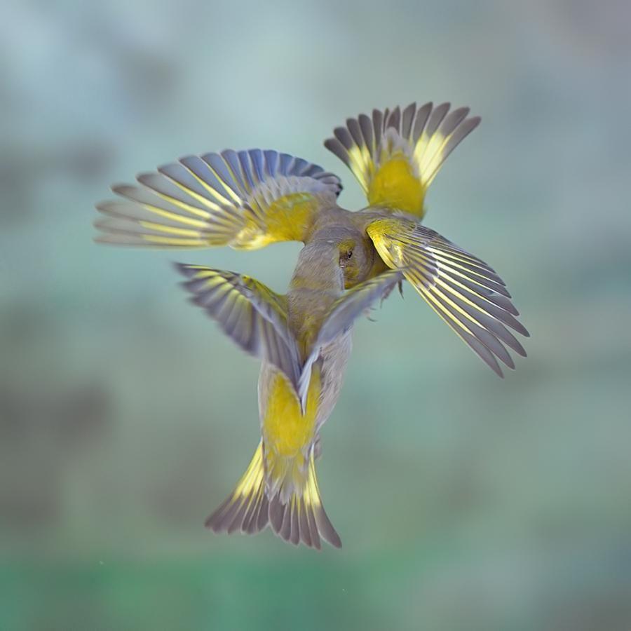 Animal Kisses! | Lips/Smackers | Pinterest | Bird and Animal