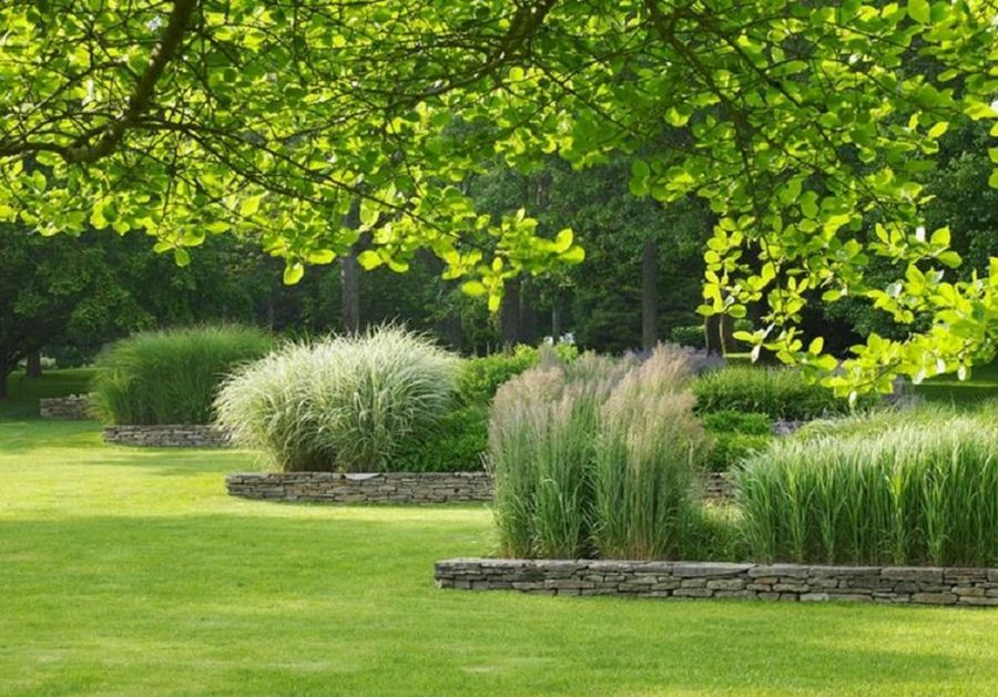 jardines en los que las gram neas ornamentales son