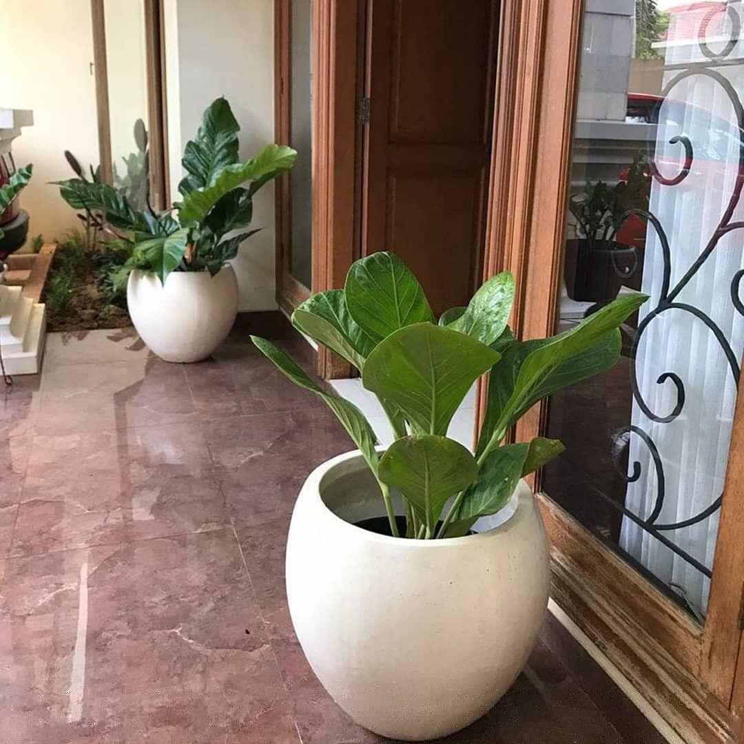 Pot Dan Tanaman Hias Depan Pintu Dekorasi Tanaman Rumah Dekorasi Boho Tanaman Sukulen