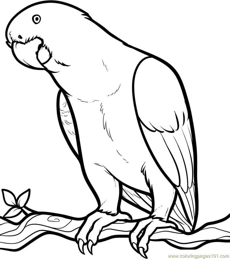 Parrot Coloring Page | Animals to color | Pinterest | Dibujos, Loros ...