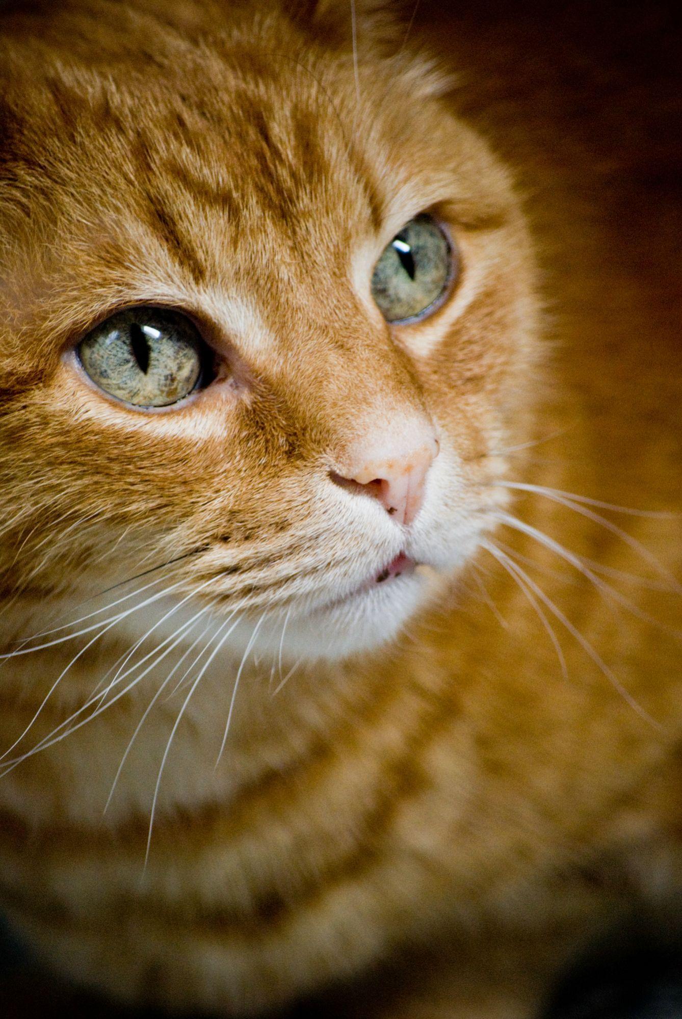 Best Photo I Ever Got Of My Cat Orange Tabby Cats Orange Cats Beautiful Cats