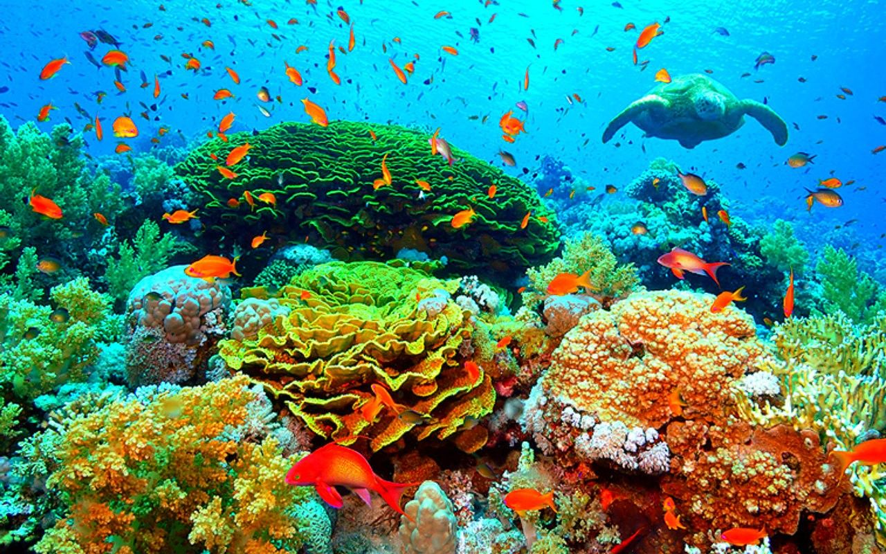 marine underwater - Google Search | Marine world ... 10 Most Beautiful Coral Reefs World