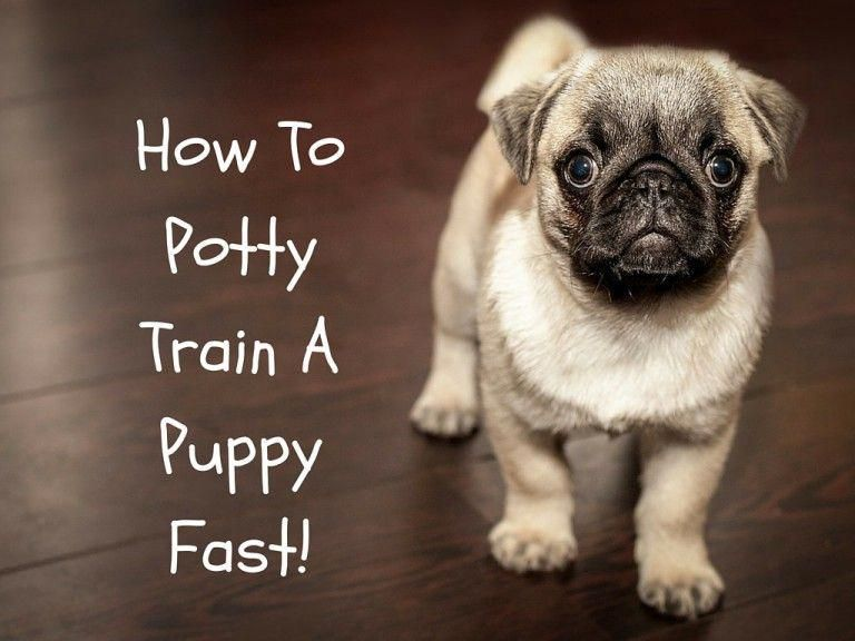 How To Potty Train A Puppy Fast Puppy Potty Training Tips