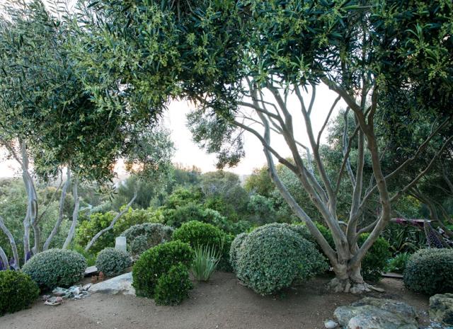 The Sorrento Garden Of Fiona Brokhoff Coastal Gardens Australian Native Garden Coastal Landscaping