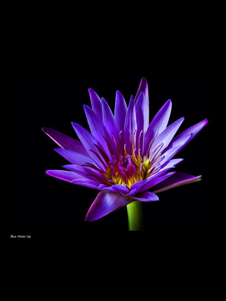 Lis Deau Flowers Pinterest Flowers
